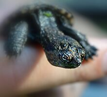 Baby Snapping Turtle by Laurie Minor