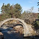 Old Packhorse Bridge, Carrbridge by Sue Robinson