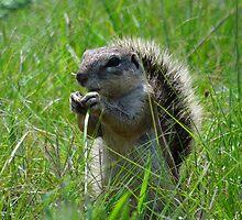 Squirrel by Hermien Pellissier