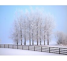 Frozen Poplar Trees II, Northern Ireland Photographic Print