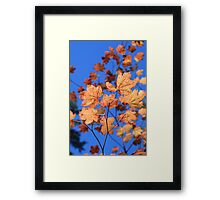 Changing of the Leaves Framed Print