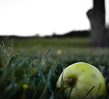 Apple Tree by Irena Paluch
