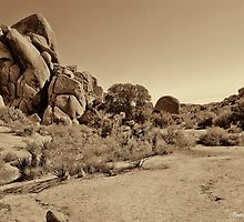 Live Oak Arroyo - Joshua Tree National Park by Brenton Cooper