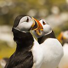 Puffin connection by Michael Stiso