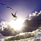 FLYING INTO THE LIGHT by Spiritinme