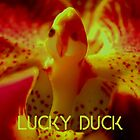 Lucky Duck by ©Ashley Edmonds Cooke