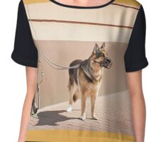 German Shepherd dog waiting Chiffon Top