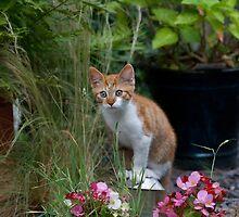 Garden Kitty by Graeme  Hunt