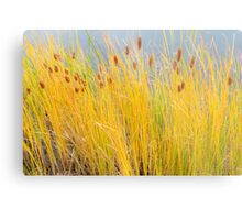Colorful Autumn Cattails Metal Print