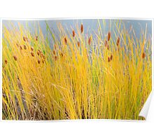 Colorful Autumn Cattails Poster