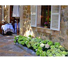 White Shutters And Green Hydrangea Photographic Print