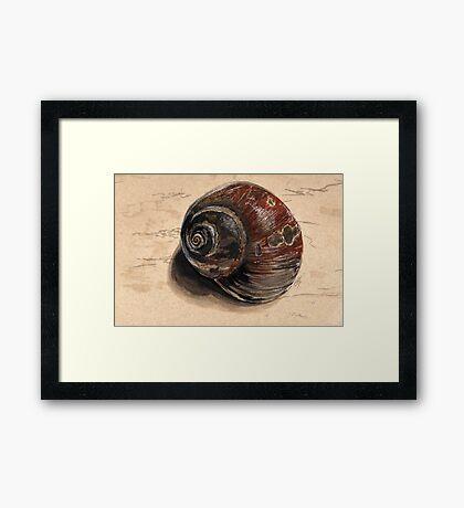 Moon Snail Framed Print