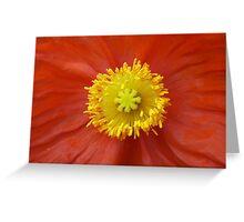 Yellow and Orange Poppy Greeting Card