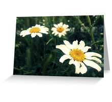 wild daisies on a green field Greeting Card