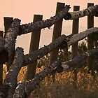 Fence at Sunrise by Kathleen  Bowman