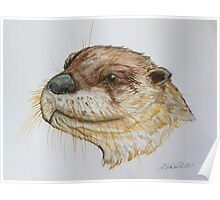 North American River Otter by Liz H Lovell Poster