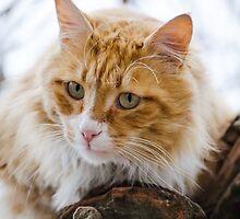 Orange cat by Patternalized