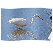 WADER ~ Great Egret by David Irwin Poster