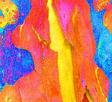 Spring Eucalypt Abstract by Margaret Saheed