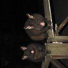 Possum Mother and Baby iPad Case by Derwent-01