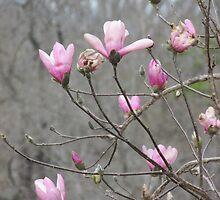 Spring Flowers by Ginny York