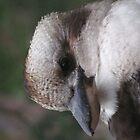 Kookaburra iPad Case by Derwent-01