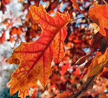 The Colours of Autumn by Susan Werby