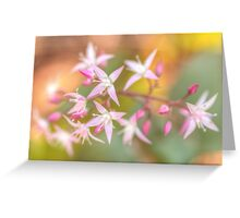 Little Beauty With A Colourful Background Greeting Card