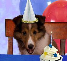 Birthday Shetland Sheepdog by jkartlife
