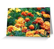 Marigolds Greeting Card