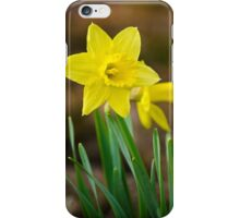 Beautiful Daffodils iPhone Case/Skin