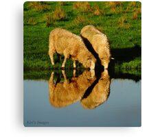 Sheep Illusions Canvas Print