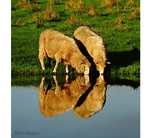 Sheep Illusions Photographic Print