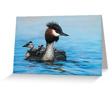 'Reflections – Australasian Crested Grebes' Greeting Card