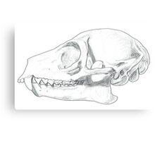Ring-tailed Lemur (Lemur catta) skull Canvas Print