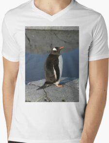 Gentoo Penguin  Mens V-Neck T-Shirt