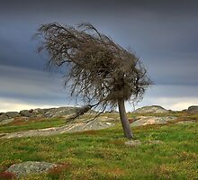 Wind swept by Hans Kawitzki
