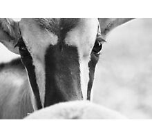 Look me in the eyes Photographic Print
