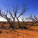 Dead in the outback by Hans Kawitzki