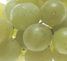 White Grapes  Sticker