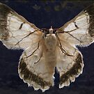 Moth On Window Sticker by StickerNuts