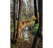 Whipstick Bush Scenery in Winter by Lorraine McCarthy Photographic Print