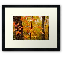 A Touch Of Orange Framed Print