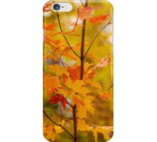 A Touch Of Orange iPhone Case/Skin