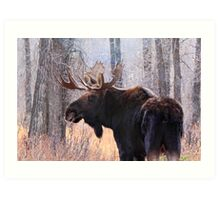 Bull Moose in Teton N.P., Wyoming Art Print