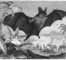 Vampire Bats  by BravuraMedia
