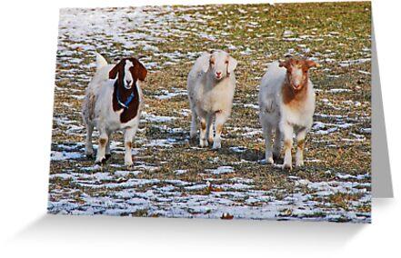 The Three Goats by Mary Carol Story
