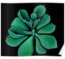 Green Succulent Poster