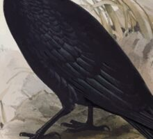John Gould The Birds of Europe 1837 V1 V5 221 Carrion Crow Sticker