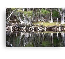 Reflections Along Melaleuca Creek Canvas Print
